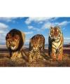 Poster dierenrijk Afrika 47 x 67 cm
